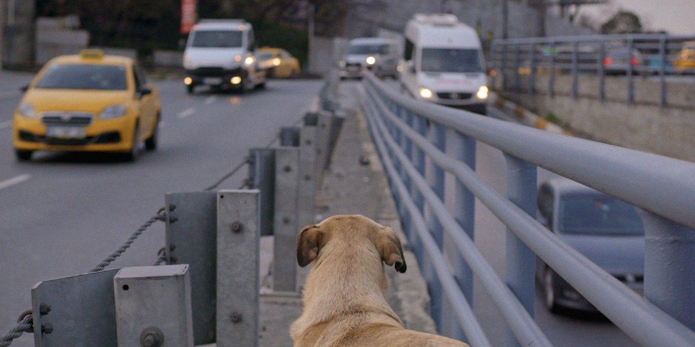 Trailer de 'Stray' revela documentário comovente sobre a enorme população de cães de rua em Istambul 1