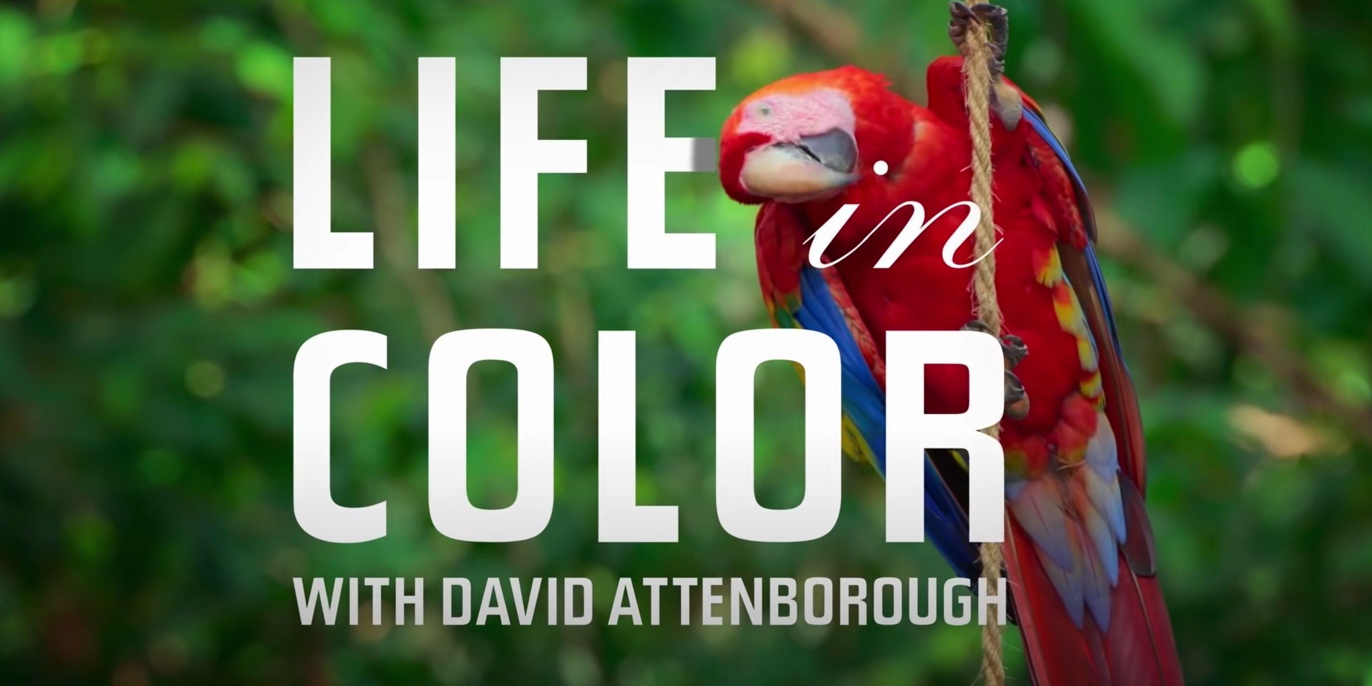 زندگی رنگی (مستند)